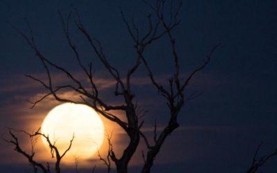 De stroom van het maanritme. Hoe de maan kan inspireren.